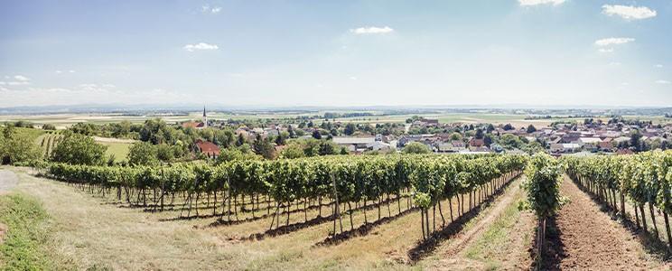 Weingut Baier