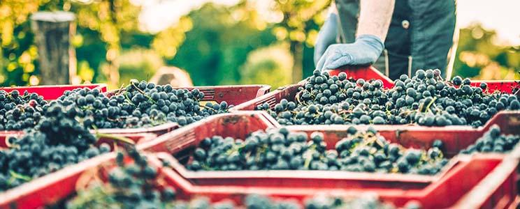 Weinbau Mößlinger